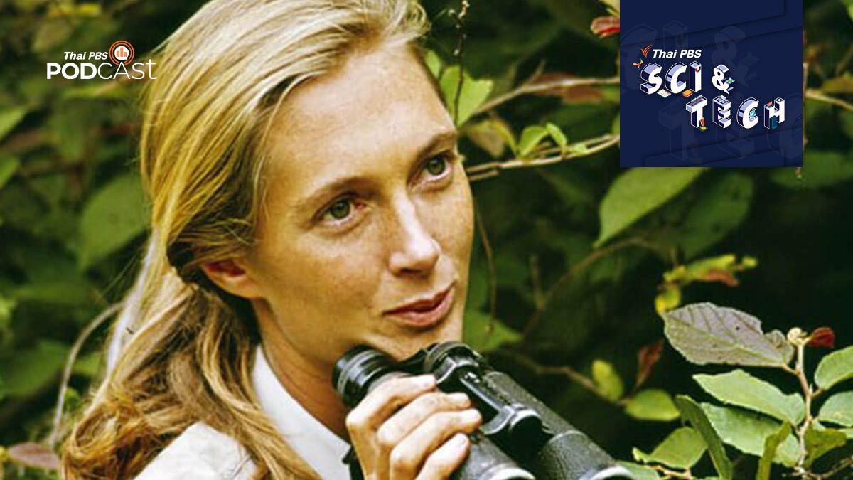 เจน กูดอลล์ (Jane Goodall) ผู้เชื่อมเรื่องราวระหว่างมนุษย์และลิงชิมแปนซี
